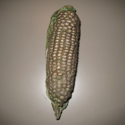 13. corn 8 in
