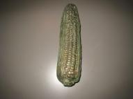 14. corn 9.5 in