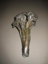 38. broccoli long stem 8 in