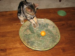 platter with kitten